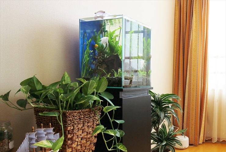 ヒーターを使わない水槽の保温術