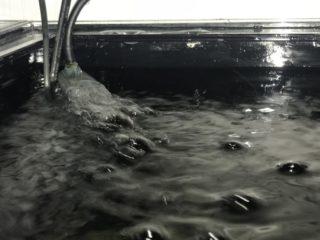 海水魚水槽の中に水流ポンプを入れて最適な水流を作ろう!