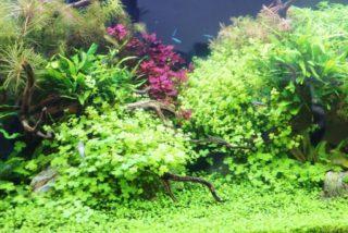 美しい水草水槽【プロのレイアウト事例をご紹介します】