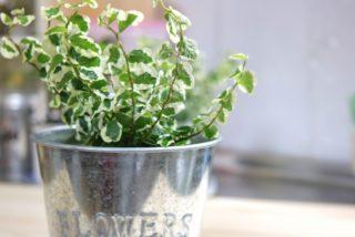アクアテラリウムにおすすめの植物10選/ポイントは耐陰性&根腐れ&水切れです