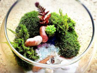 きれいな苔を育てよう!簡単に育つ、栽培するのにお勧めな苔10選!