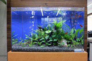 熱帯魚水槽の水質が悪化したらpHを測ろう!