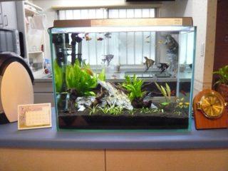 ASPシステムで飼える魚の種類はこれだ