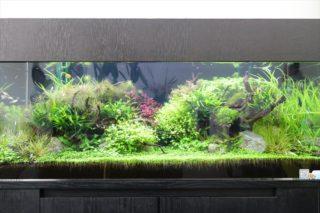 きれいで育てやすい水草人気ランキング10