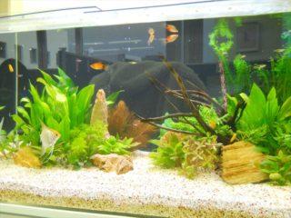 熱帯魚につく寄生虫の種類と治療方法