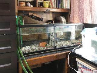 家具を熱帯魚用の水槽台として利用する!?学習机がちょうどよい理由とは
