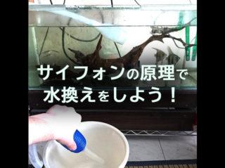 【簡単水抜き】サイフォンの原理を使えば熱帯魚水槽の水がすぐ抜ける!?