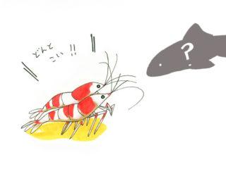 ビーシュリンプと一緒に飼える魚や生き物は何がいる?