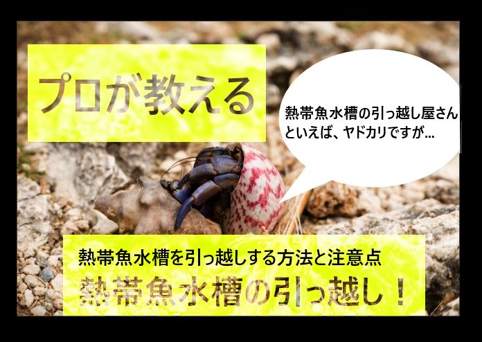 【プロが教える】熱帯魚水槽を引越しする方法や注意点など!
