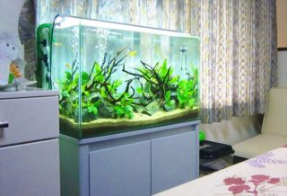 ろ過の仕組みを知ろう!熱帯魚水槽内の糞尿や汚れが無害化されるまで