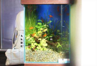 【初心者におすすめ】美しくてカラフルな熱帯魚 10選