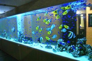 飲食店やレストランに熱帯魚水槽や海水魚水槽を設置するメリットとデメリット