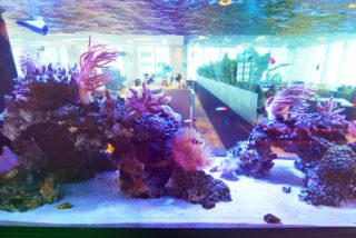 【50事例で一目瞭然】オフィスに熱帯魚水槽を設置したらこうなった!