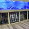 【プロが使う】海水魚飼育おすすめ人気のプロテインスキマー ベスト3