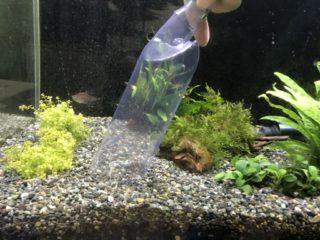 【徹底解説】熱帯魚水槽の底砂(砂利)掃除・クリーニング必要か?その方法とは