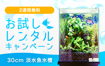 30cm淡水魚水槽を2週間無料!お試しレンタルキャンペーン