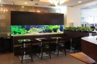 ホテルに熱帯魚水槽!?部屋でロビーで熱帯魚が優雅に泳ぐホテルのご紹介