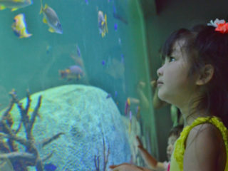 アクアリウムのプロが教える水族館をより楽しむ方法とは