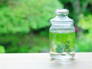 【プロが教える】水槽の水をピカピカの透明にするコツとは!?