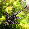 【水草が食害!?】水槽の水草を食べる熱帯魚やエビの種類と対策とは