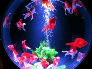 熱帯魚・金魚水槽の水換えをしないとどうなる!?必ず起こる3つの危険な変化
