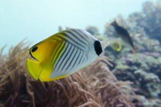 磯遊びで採集した海水魚を飼育しよう! 持ち帰り方から飼育方法まで