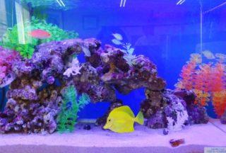 【神奈川の熱帯魚店】初心者が安心して買える・相談できるショップ10選