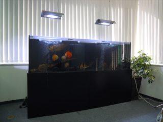 大型熱帯魚を飼育したい! 飼う前の注意点や心構え、ポイントを解説!