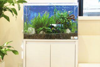 熱帯魚がきれいに見える!おすすめの水槽用LED照明ベスト3