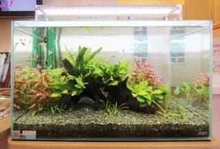 【初心者向き】60cm水槽とは?飼える魚は?水草は?レイアウトは?