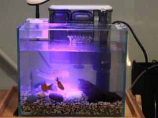 【効果と値段で選ぶ】熱帯魚におススメのろ過材ベスト5をご紹介