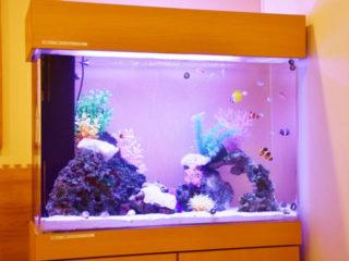 【プロも使ってます!】海水魚水槽にオススメのろ過材ベスト5をご紹介