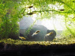 メダカの水槽セットを紹介!簡単に飼育するならこのセットがおすすめ5選