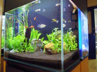 初めて熱帯魚を飼育するならこの種類がおすすめ!ベスト10