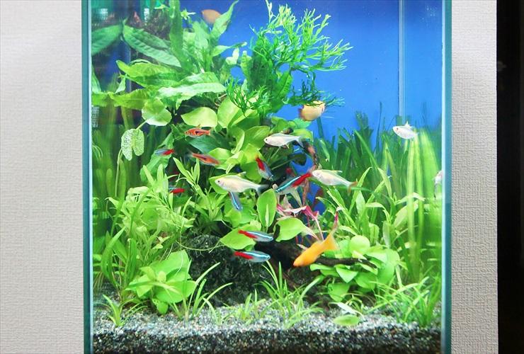 熱帯魚飼育に最低限必要な器具、メンテナンス道具 10選