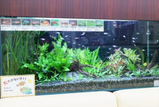 【中型水槽】90cm水槽とは?飼える魚は?水草は?レイアウトは?
