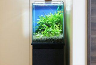小型LEDライトでも水草が育つ!小型水槽用のおすすめLEDベスト10