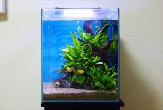 丈夫で育てやすいロゼット型水草の特徴と初心者におすすめ種類ベスト10