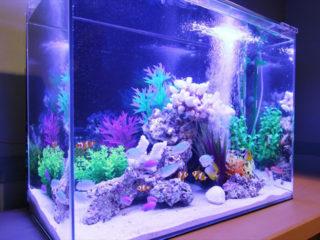 初めて熱帯魚水槽を鑑賞するときはココを見よう!注目ポイント10