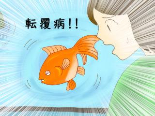 金魚が浮く・沈む?!転覆病と便秘・消化不良の関係と対処法とは!
