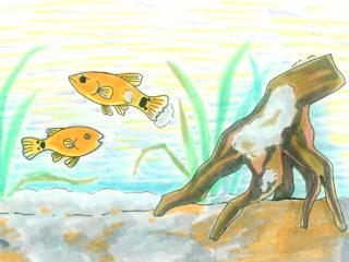 熱帯魚水槽に水カビや白カビが発生!その原因や撃退方法を教えます!