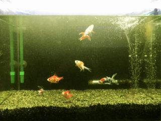 病気になった熱帯魚を隔離しよう!隔離水槽の種類と使い方を解説