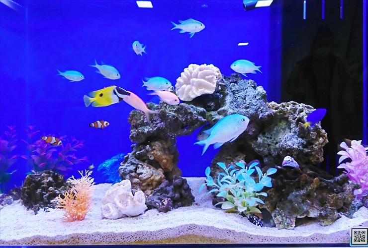 熱帯魚が映える水槽バックシートの選び方とは