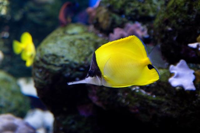 アクアリウムの災害対策!飼育できなくなった熱帯魚は引き取り先を探そう!