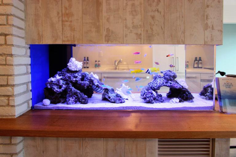 まとめ・熱帯魚をおしゃれに見せる水槽レイアウト術のご紹介