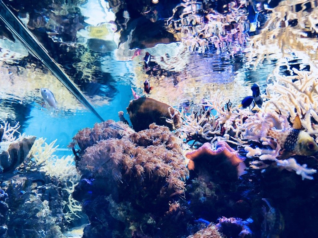 まとめ・熱帯魚飼育が情操教育に最適な理由とメリットについて