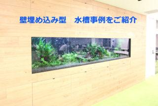 【壁面水槽】壁埋込み型の熱帯魚水槽!プロのレイアウト事例をご紹介