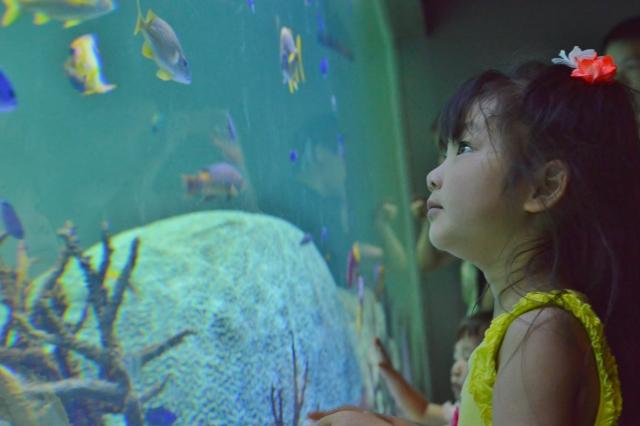 【熱帯魚飼育は情操教育に最適】その理由やメリットを説明します!