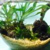 ボトルアクアリウムに最適なおすすめ水草ベスト10