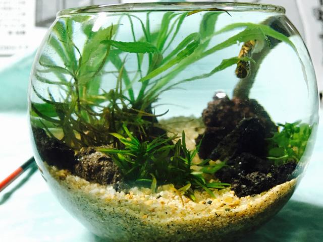 まとめ・ボトルアクアリウムに入れるおすすめな熱帯魚やエビ、貝ベスト10をご紹介します!